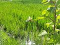 Agricultura a la Ribera - 29.jpeg