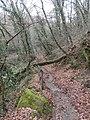 Albero sradicato - panoramio.jpg