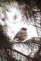 Alberta Birds (16827925740).jpg