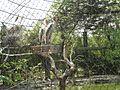 Alipore Zoological Gardens, Kolkata, West Bengal 2.jpg
