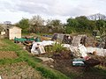 Allotments at Leigh-on-Sea, East Sussex - geograph.org.uk - 1347102.jpg