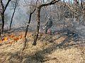 Allumage OFRAN Brûlage dirigé FD Morières-Montrieux 2003.jpg
