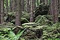 Altburgbachtal im Naturschutzgebiet Schönecker Schweiz Kreis Bitburg,Prüm 01.jpg
