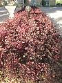 Amin al-Islami Park - Trees and Flowers - Nishapur 020.JPG