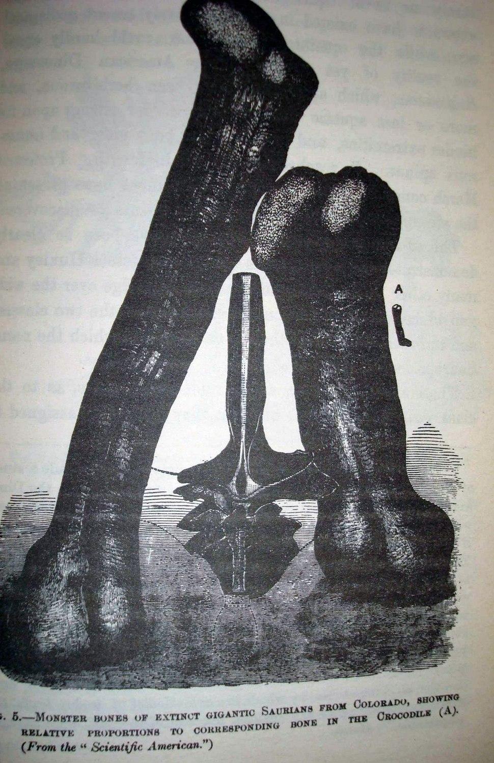 Amphicoelias bones1