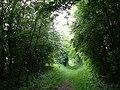 An Essex footpath - geograph.org.uk - 22871.jpg