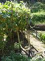 Antic jardí botànic P1250845.jpg