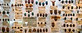 Antique Bug Collection (26122678761).jpg