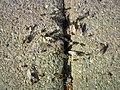 Ants Wedding (5926219611).jpg