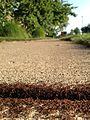 Ants on sidewalk (28130242443).jpg