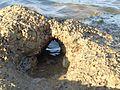 Aortic arch.jpg