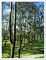 April Freiburg Botanischer Garten - Master Botany Photography 2013 - panoramio (9).jpg