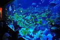 Aquaria KLCC fish tank.jpg