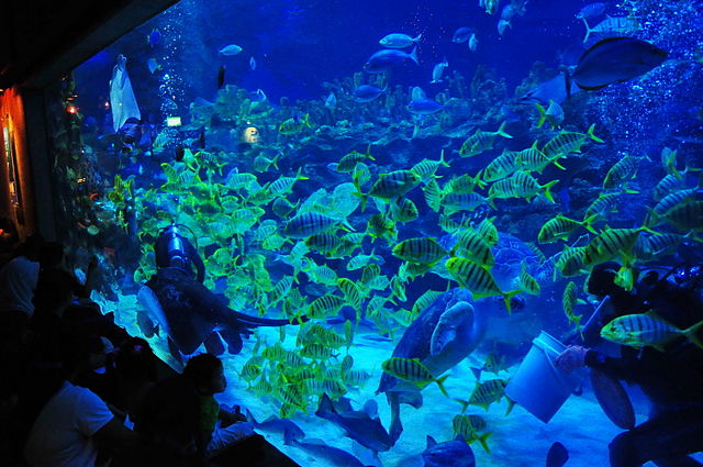 Feeding time in the fish tank, KLCC Aquaria, Malaysia, Author SAM Cheong, Source http://www.flickr.com/photos/41234325@N06/5174061688 (CC BY-SA 2.0 Generic)