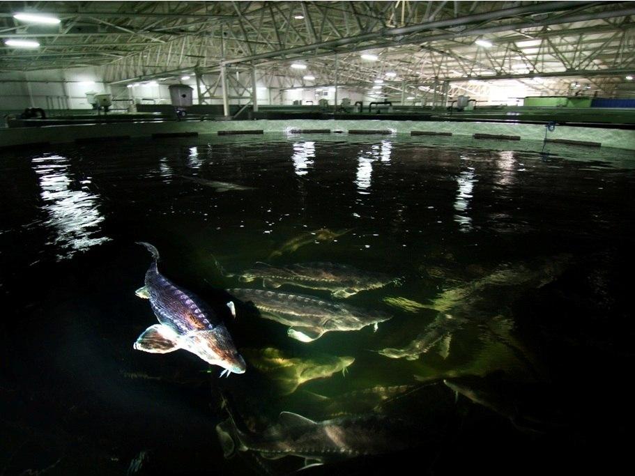 Aquatir 0502013 11