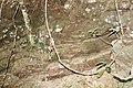 Araguainha - State of Mato Grosso, Brazil - panoramio (321).jpg