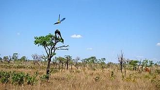 Emas National Park - Image: Araras Pq Emas