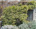 Arboretum Trsteno 09.jpg