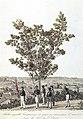 Arbre appelle Genipavera, et gens qui demandent l'aumône pour la Fete du S. Esprit. Diamantino de la Province de Matto-Grosso, Janvier 1828., do acervo do Instituto Hercule Florence.jpg