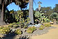 Arizona Cactus Garden at Stanford University 3.JPG