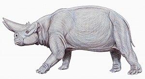 Arsinoitherium - Restoration of A. zitteli