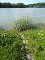 Auf der Rheinschanzinsel am Altrhein.jpg