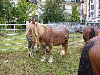 Burguete horse - Burguete horses