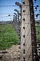 Auschwitz - panoramio (54).jpg
