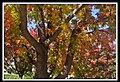 Autumn Leaves begin to fall-024 (5662278597).jpg