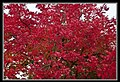 Autumn Leaves begin to fall-029 (5670737437).jpg