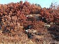 Autumn Red-Mountains Series - 3rd Going to the top of mountains - Red Corals on Whilte Rocks.jpg