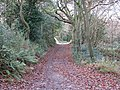 Autumn leaves on the path through Budleigh Salterton golf course - geograph.org.uk - 1074713.jpg