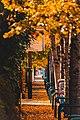 Autumnwalkway.jpg