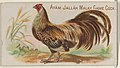 Ayam Jallak Malay Game Cock, from the Prize and Game Chickens series (N20) for Allen & Ginter Cigarettes MET DP835049.jpg
