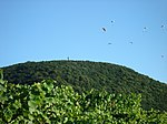 Az egedi paplanernyősök - panoramio.jpg