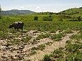 Búfula dàgua APARECIDA SP - panoramio.jpg