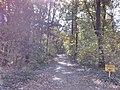 Bělehrad, Banjička šuma.jpg