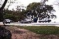 Bahamas 1988 (043) New Providence The Caves (22697094044).jpg
