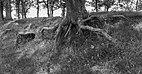 Balloërveld, natuurgebied in Drenthe 026.jpg