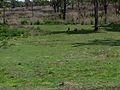 Bandipur forest.jpg