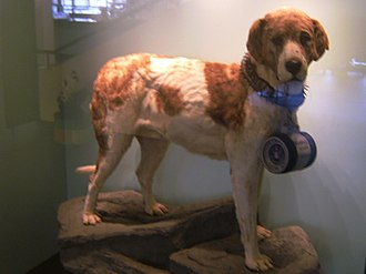 Barry (dog) - Barry's preserved body as currently on display at the Natural History Museum, Bern.