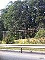 Barueri - SP - panoramio (17).jpg