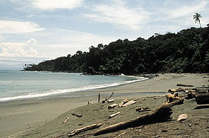 Gorgona island beach