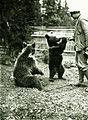 Bear Fortepan 95965.jpg