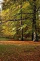 Beech trees - geograph.org.uk - 1562942.jpg