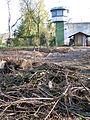 Beginn von Hochwasserschutzmaßnahmen zunächst durch Teil-Entwaldung in der Grünanlage vom Pflegewohnstift Franz-Guizetti-Park hinter der JVA Celle, Blickrichtung Schwicheldtstraße.jpg