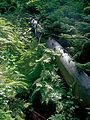 Beskid Śląski – las w Rezerwacie Barania Góra.jpg