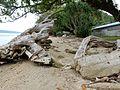 Big Driftwood and Concrete (30569429024).jpg