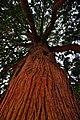 Big Tree (4654556250).jpg