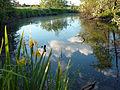 Biodiversitätsprojekt Schmuttertal, Natura2000, Naturpark Augsburg - Westl. Wälder.jpg
